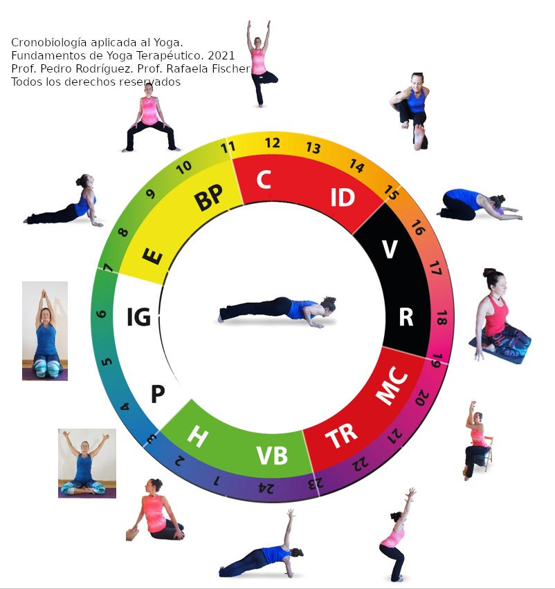 yoga terapeutico y ritmos horarios